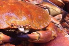 krabba-15